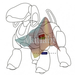 CPG modulation for navigation and omnidirectional quadruped locomotion