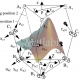 INVERSE KINEMATICS AND DYNAMICS OF THE 3-RRS PARALLEL PLATFORM