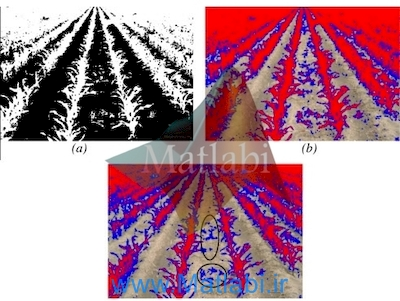 Automatic expert system for weedscrops identification in images from maize fields